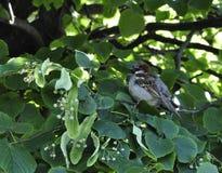 在夏天绽放绿色树射击前 鸟舍 库存照片