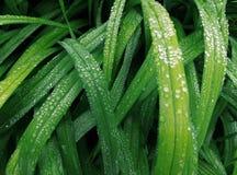 在夏天绿草的雨下落 库存图片
