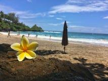 在夏威夷和树的海滩 库存照片