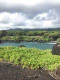 在夏威夷和树的海滩 免版税库存照片