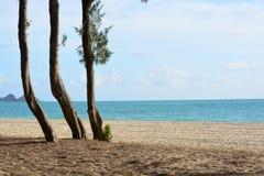 在夏威夷海岸线的三棵树 免版税库存照片