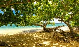 在夏威夷海滩的树 库存照片