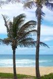 在夏威夷海滩的椰子树 免版税库存照片