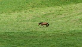 在夏威夷的大岛的美丽的马 免版税库存照片