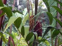 在夏威夷的大海岛上的独特的植物 库存照片