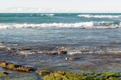 在夏威夷的浅水区的绿海龟 免版税库存图片