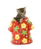在夏威夷衬衣的逗人喜爱的平纹小猫 库存照片