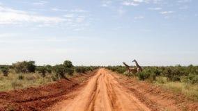 在夏季的大草原领域 免版税库存图片