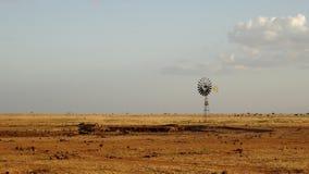 在夏季的大草原领域 库存图片