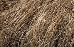 在夏季的布朗干草 免版税库存图片