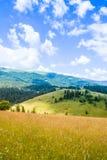 在夏日期间,山谷 使自然夏天环境美化 免版税库存照片