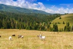 在夏日期间,山谷 使自然夏天环境美化 免版税库存图片