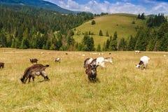 在夏日期间,山谷 使自然夏天环境美化 库存照片