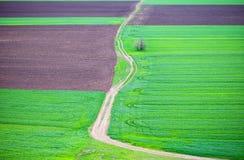 在夏时和道路的绿色和棕色领域 库存照片