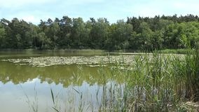 在夏时的湖风景 乡下在哈维尔兰县在德国 股票录像