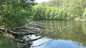 在夏时的湖风景 乡下在哈维尔兰县在德国 影视素材