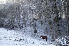 在外面冬天场面的马 免版税库存照片