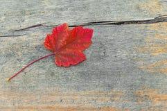在外面木桌上的秋天公园红色叶子 免版税库存照片