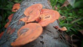 在外面树的自然青苔 库存图片