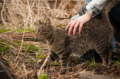 在外面步行的一只猫 宠爱由人 免版税库存图片