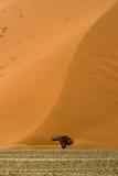 在多云天气, Sossusvlei,纳米比亚的沙丘40 免版税图库摄影
