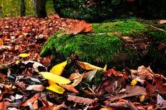 在多云天气-在树日志的橡木叶子的色的秋天风景 免版税库存图片