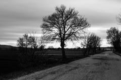 在多云天空下的一条乡下公路与在左边的一个树剪影 免版税库存照片