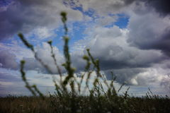 在多云天空前面的被弄脏的植物 库存照片