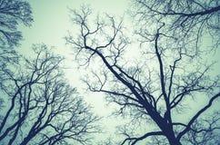 在多云天空的不生叶的光秃的树 库存照片