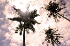 在多云天空的棕榈树 免版税图库摄影