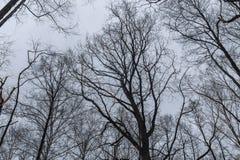 在多云天空背景的树枝  免版税库存照片