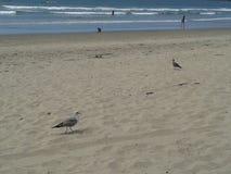 在多云海防堤广场海滩Ensenada海波浪蓝天上的飞行的鸽子海鸥和鹈鹕 库存照片