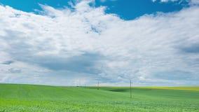在多云绿色领域的电线   股票录像