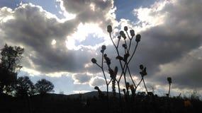 在多云晴朗的天空的草 免版税库存图片