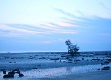 在多岩石的海滩的孤零零树与多云蓝天在黎明-自然风景背景 库存图片