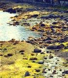 在多岩石的海滩的海草 免版税库存照片