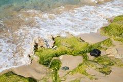 在多岩石的海滩洗涤的海草 库存图片