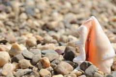 在多岩石的海滩的海壳 免版税库存图片