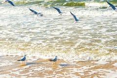 在多暴风雨的天气期间的波儿地克的海岸 免版税库存照片