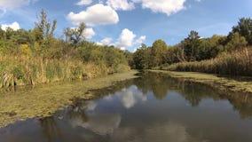 在多沼泽的支流的一天 股票录像