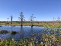 在多沼泽的支流的夏天 免版税库存图片