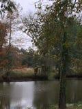 在多沼泽的支流的秋天 库存图片