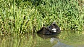 在多瑙河三角洲的被淹没的fishermens小船 库存照片
