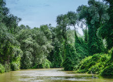 在多瑙河三角洲的丰富的植被 免版税库存图片