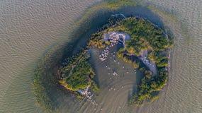 在多瑙河三角洲罗马尼亚的达尔马希亚鹈鹕pelecanus crispus 库存照片