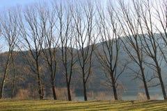在多瑙河在冬天,奥地利 免版税库存图片