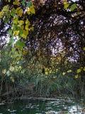 在多瑙河的秋天故事km的368 1 免版税库存图片