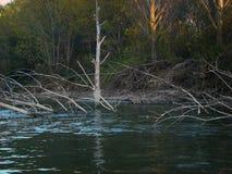 在多瑙河的秋天故事km的358 2 库存照片