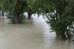 在多瑙河的洪水 库存图片