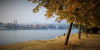 在多瑙河附近的秋天树 免版税库存照片